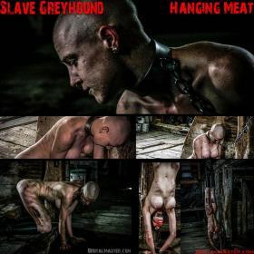 Slave Greyhound 10 November 2019