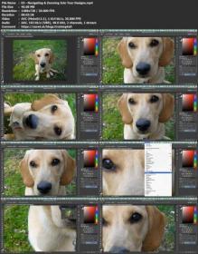 [ FreeCourseWeb com ] Learn Photoshop & Make a Meme- Introducing the Interface, Layers, Cutouts & Shapes
