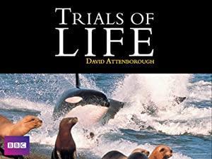 The Trials of Life (1990) Season 1 S01 + Extras (1080p BluRay x265 HEVC 10bit AAC 2 0 afm72)
