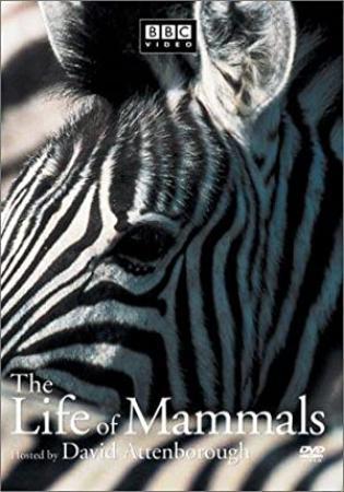 The Life of Mammals (2002) Season 1 S01 + Extras (576p DVD x265 HEVC 10bit AC3 2.0 afm72)