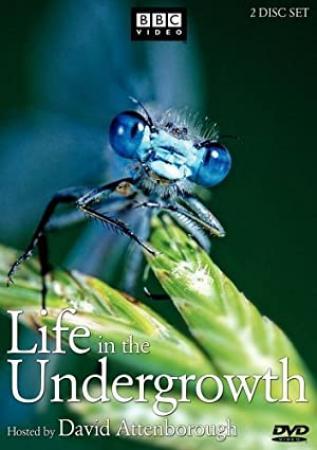 Life in the Undergrowth (2005) Season 1 S01 + Extras (576p DVD x265 HEVC 10bit AC3 2.0 afm72)