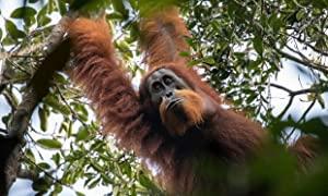 Primates S01E02 Family Matters 1080p AMZN WEBRip DDP2 0 x264-NTb[rarbg]